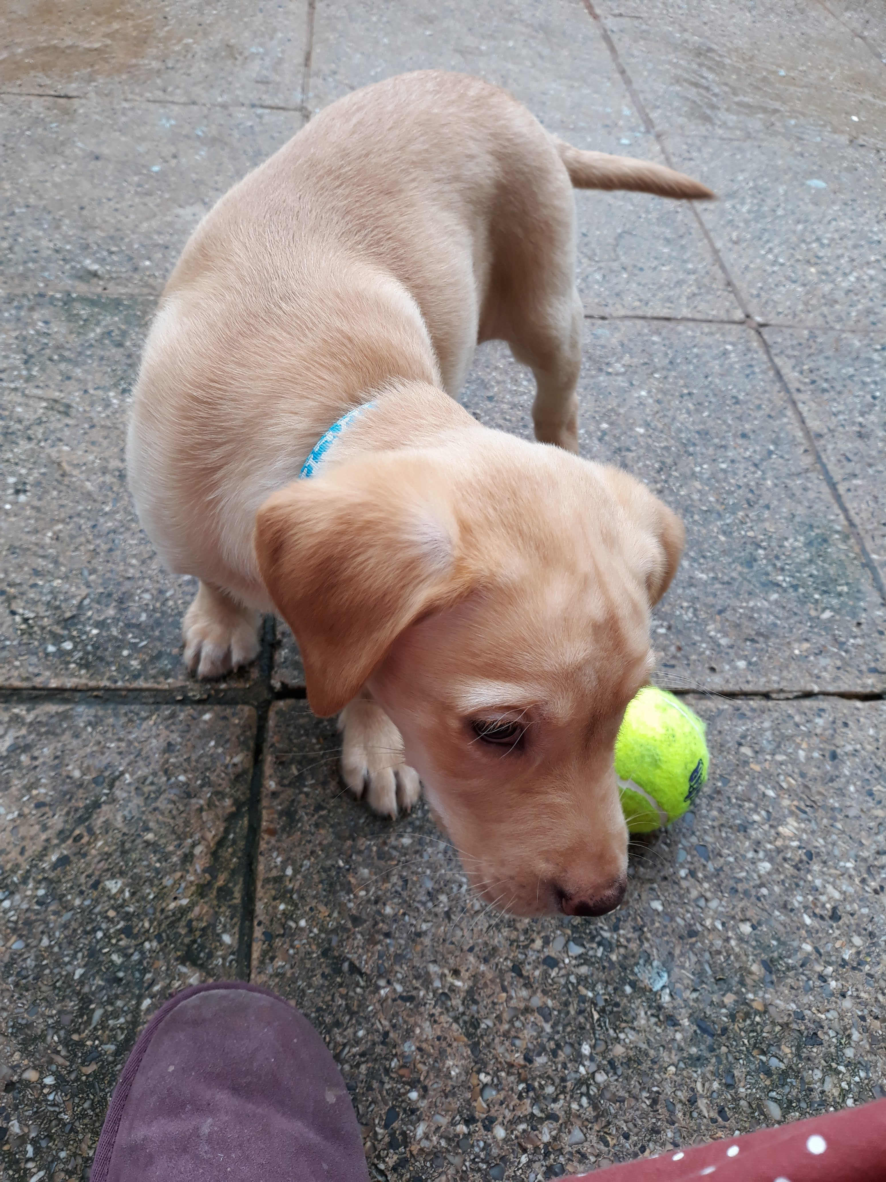 playing with the ball