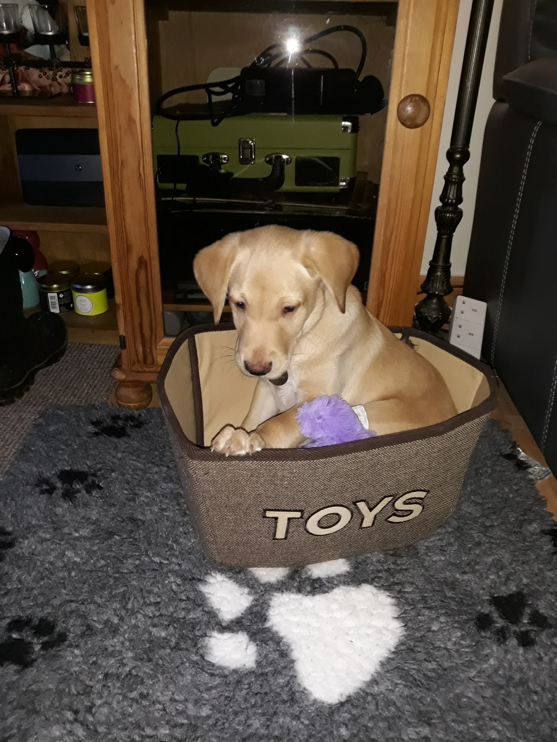 in the toy box again