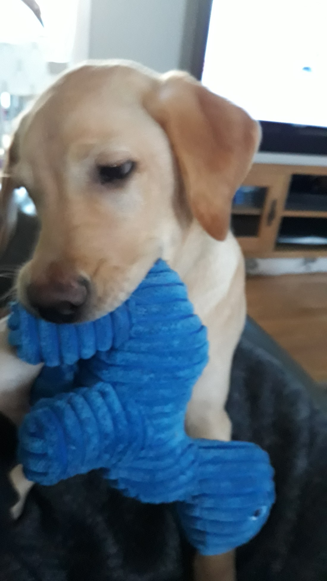 blue dinosaur (1)