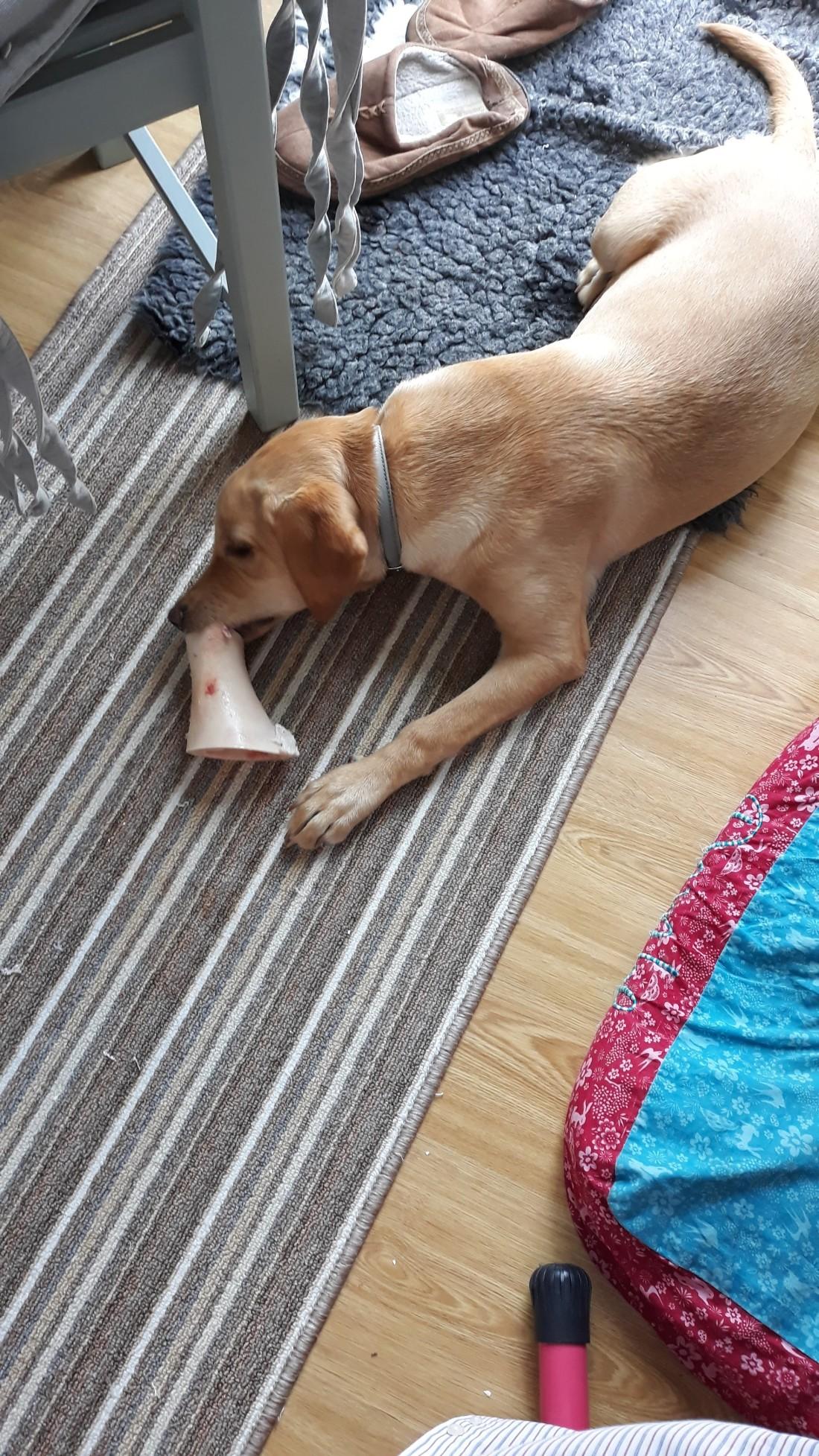 new bone